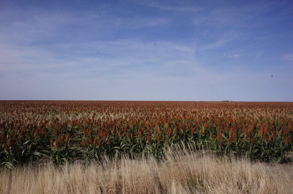 Kansas Flat iheartcardio